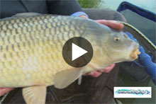 Cotswold Angling Video
